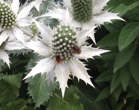 bees denver botanic garden