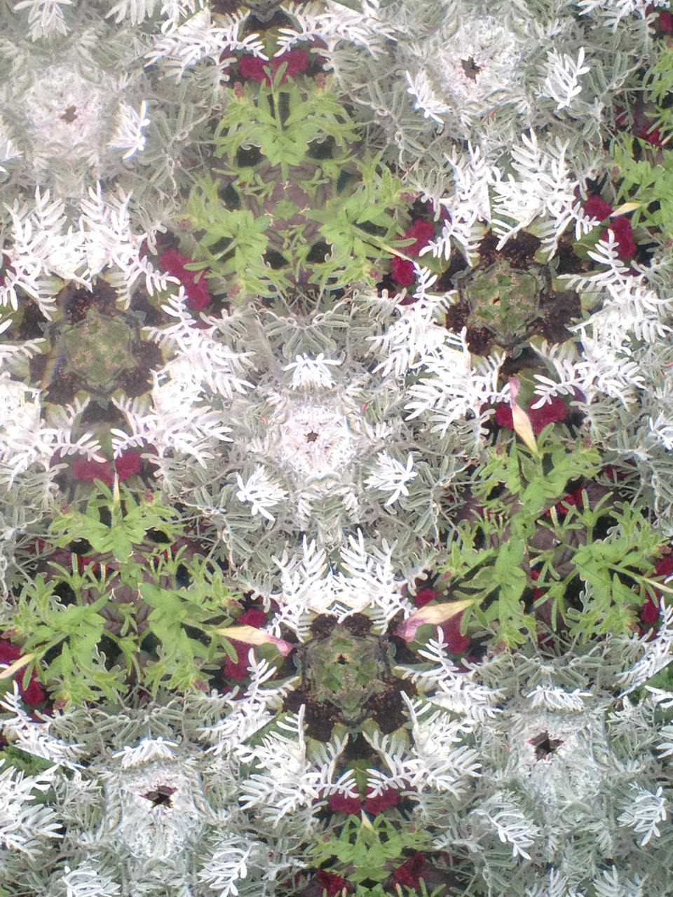 denver botanic garden kaleidascope